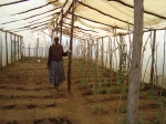Agriculture project at an IDP Camp